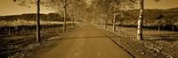 """Trees along a road, Beaulieu Vineyard, Rutherford, Napa Valley, Napa, Napa County, California, USA by Panoramic Images - 27"""" x 9"""""""