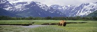 Kukak Bay, Katmai National Park, Alaska Fine Art Print