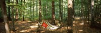 Hammock in a Forest Baden-Wurttemberg Germany