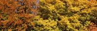 """Autumnal trees in a park, Ludwigsburg Park, Ludwigsburg, Baden-Wurttemberg, Germany by Panoramic Images - 27"""" x 9"""", FulcrumGallery.com brand"""