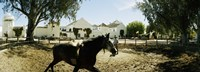 "Horse running in an paddock, Gerena, Seville, Seville Province, Andalusia, Spain by Panoramic Images - 27"" x 9"""
