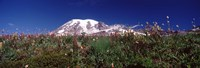 "Wildflowers on mountains, Mt Rainier, Pierce County, Washington State, USA by Panoramic Images - 27"" x 9"""
