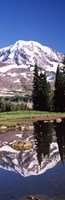 "Reflection of a mountain in a lake, Mt Rainier, Pierce County, Washington State, USA by Panoramic Images - 9"" x 27"""