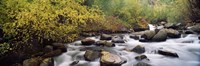 """River passing through a forest, Inyo County, California, USA by Panoramic Images - 27"""" x 9"""""""