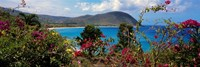 """Tropical flowers at the seaside, Deshaies Beach, Deshaies, Guadeloupe by Panoramic Images - 27"""" x 9"""" - $28.99"""