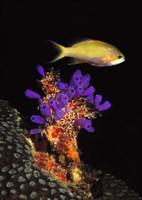 "9"" x 27"" Underwater Pictures"