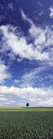 """Germany, Baden-Wurttemberg,Single tree in field, clouds by Panoramic Images - 9"""" x 27"""", FulcrumGallery.com brand"""