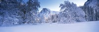 Oak trees and rock formations covered with snow, Half Dome, Yosemite National Park, California Fine Art Print
