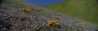 """Purple and Orange Wildflowers on a hillside, California by Panoramic Images - 27"""" x 9"""""""