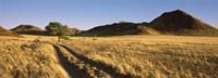 Trails Passing through a Desert Namibia