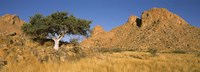 """Tree in the Namib Desert, Namibia by Panoramic Images - 27"""" x 9"""""""