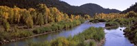 """River flowing through a forest, Jackson, Jackson Hole, Teton County, Wyoming, USA by Panoramic Images - 27"""" x 9"""""""