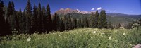 """Forest, Kebler Pass, Crested Butte, Gunnison County, Colorado, USA by Panoramic Images - 27"""" x 9"""", FulcrumGallery.com brand"""