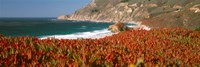 """Flowers on the coast, Big Sur, California, USA by Panoramic Images - 27"""" x 9"""", FulcrumGallery.com brand"""