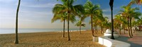 Palm trees on the beach, Las Olas Boulevard, Fort Lauderdale, Florida, USA Fine Art Print