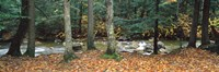 """River flowing through a forest, White Mountain National Forest, New Hampshire, USA by Panoramic Images - 27"""" x 9"""""""