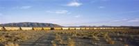 "Freight train in a desert, Trona, San Bernardino County, California, USA by Panoramic Images - 27"" x 9"""
