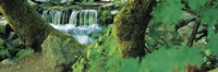 """Waterfall in a forest by Panoramic Images - 27"""" x 9"""", FulcrumGallery.com brand"""