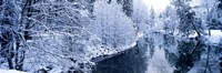 """Snow covered trees along a river, Yosemite National Park, California, USA by Panoramic Images - 27"""" x 9"""""""
