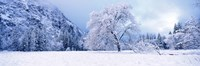 """Snow covered oak trees in a valley, Yosemite National Park, California, USA by Panoramic Images - 27"""" x 9"""""""