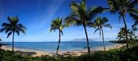 "Palm trees on the beach, Maui, Hawaii, USA by Panoramic Images - 27"" x 12"""