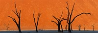 Dead trees by red sand dunes, Dead Vlei, Namib-Naukluft National Park, Namibia Fine Art Print