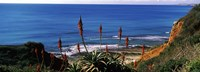 """Flowers and plants on the beach, Alvor Beach, Algarve, Portugal by Panoramic Images - 27"""" x 9"""", FulcrumGallery.com brand"""