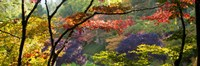 """Trees in a garden, Butchart Gardens, Victoria, Vancouver Island, British Columbia, Canada by Panoramic Images - 27"""" x 9"""""""