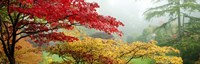 """Red & Yellow Trees in Butchart Gardens, Vancouver Island, British Columbia, Canada by Panoramic Images - 27"""" x 9"""""""