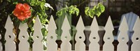"""White picket fence and red hibiscus flower along Whitehead Street, Key West, Monroe County, Florida, USA by Panoramic Images - 27"""" x 9"""""""