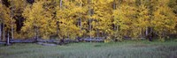 """Forest, State Highway 62, Ridgway, Colorado by Panoramic Images - 27"""" x 9"""", FulcrumGallery.com brand"""