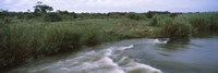"""River flowing through a forest, Sabie River, Kruger National Park, South Africa by Panoramic Images - 27"""" x 9"""""""