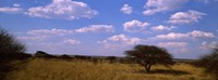 "Landscape view of arid savannah in the dry season, Central Kalahari Game Reserve, Botswana by Panoramic Images - 27"" x 9"""