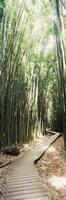 Trail in a bamboo forest, Hana Coast, Maui, Hawaii, USA Fine Art Print