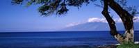 "Tree at a coast, Kapalua, Molokai, Maui, Hawaii, USA by Panoramic Images - 27"" x 9"""