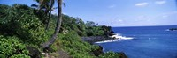 "Palm trees with plants growing at a coast, Black Sand Beach, Hana Highway, Waianapanapa State Park, Maui, Hawaii, USA by Panoramic Images - 27"" x 9"""