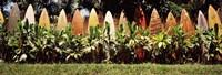 Surfboard fence in a garden, Maui, Hawaii, USA Fine Art Print