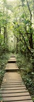 """Stepped path surronded by Bamboo shoots, Oheo Gulch, Seven Sacred Pools, Hana, Maui, Hawaii, USA by Panoramic Images - 9"""" x 27"""""""