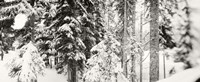 """Snow covered evergreen trees at Stevens Pass, Washington State (black and white) by Panoramic Images - 27"""" x 9"""""""