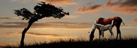 "Horse mare and a foal grazing by tree at sunset by Panoramic Images - 27"" x 9"""