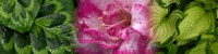 """Leaves and pink flowers by Panoramic Images - 33"""" x 8"""""""