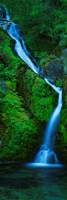 "Waterfall in a forest, Sullivan Falls, Opal Creek Wilderness, Oregon, USA by Panoramic Images - 9"" x 27"""