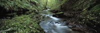 River flowing through a forest, River Lyd, Lydford Gorge, Dartmoor, Devon, England Fine Art Print