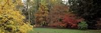 Autumn Tree Gloucestershire England