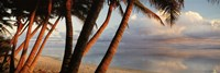 """Palm trees on the beach at sunset, Rarotonga, Cook Islands by Panoramic Images - 27"""" x 9"""" - $28.99"""