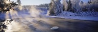 Snow covered laden trees, Dal River, Sweden Fine Art Print