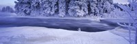 """River flowing through a snow covered forest, Dal River, Sweden by Panoramic Images - 27"""" x 9"""""""