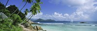 """Palm trees on the beach, Anse Severe, La Digue Island, Praslin Island, Seychelles by Panoramic Images - 27"""" x 9"""""""