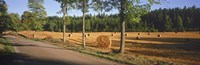 """Hay bales in a field, Flens, Sweden by Panoramic Images - 27"""" x 9"""""""