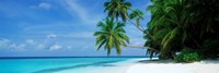 """Palm trees on the beach, Fihalhohi Island, Maldives by Panoramic Images - 27"""" x 9"""" - $28.99"""